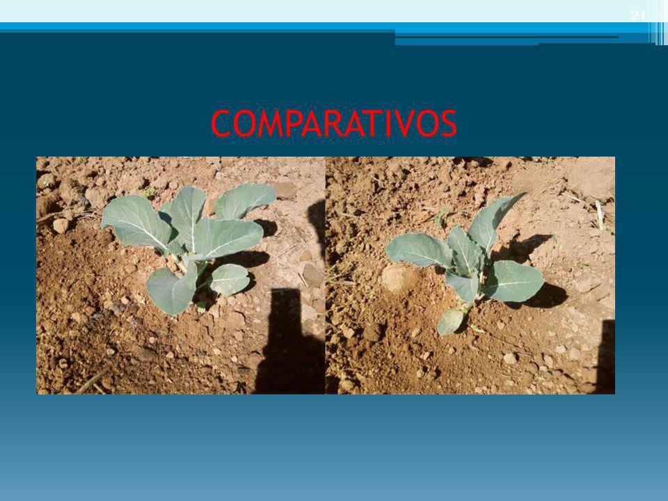 COMPARATIVOS 21