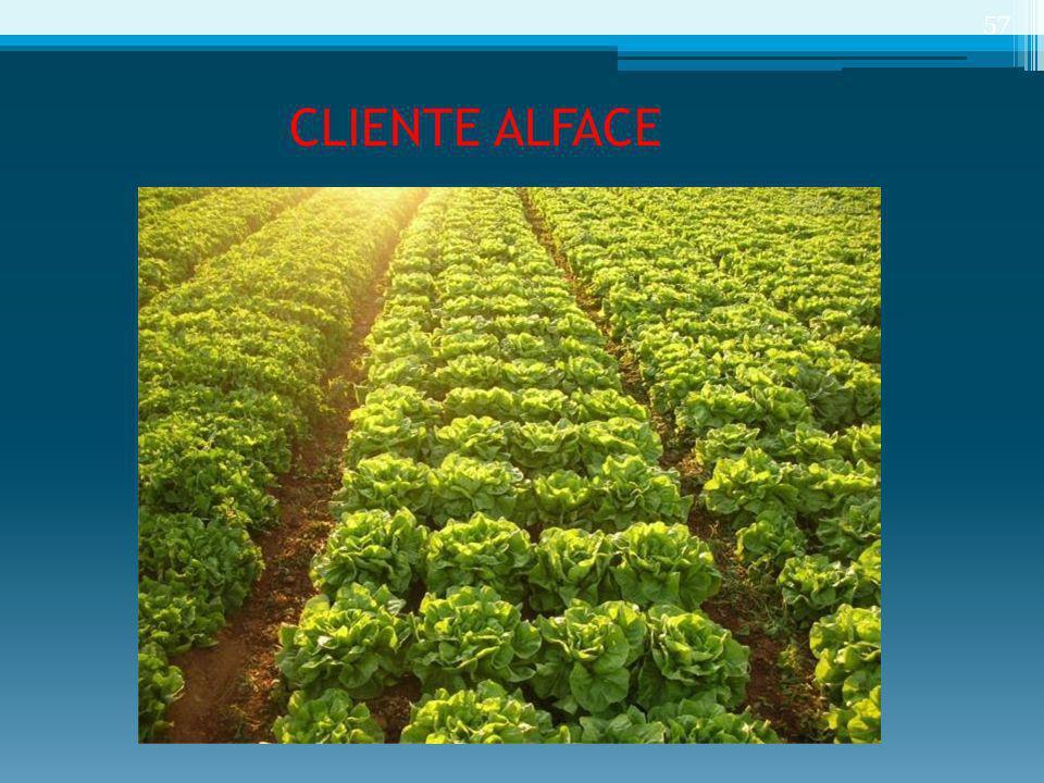 CLIENTE ALFACE 57