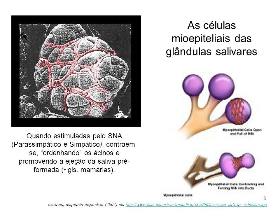"""As células mioepiteliais das glândulas salivares Quando estimuladas pelo SNA (Parassimpático e Simpático), contraem- se, """"ordenhando"""" os ácinos e prom"""