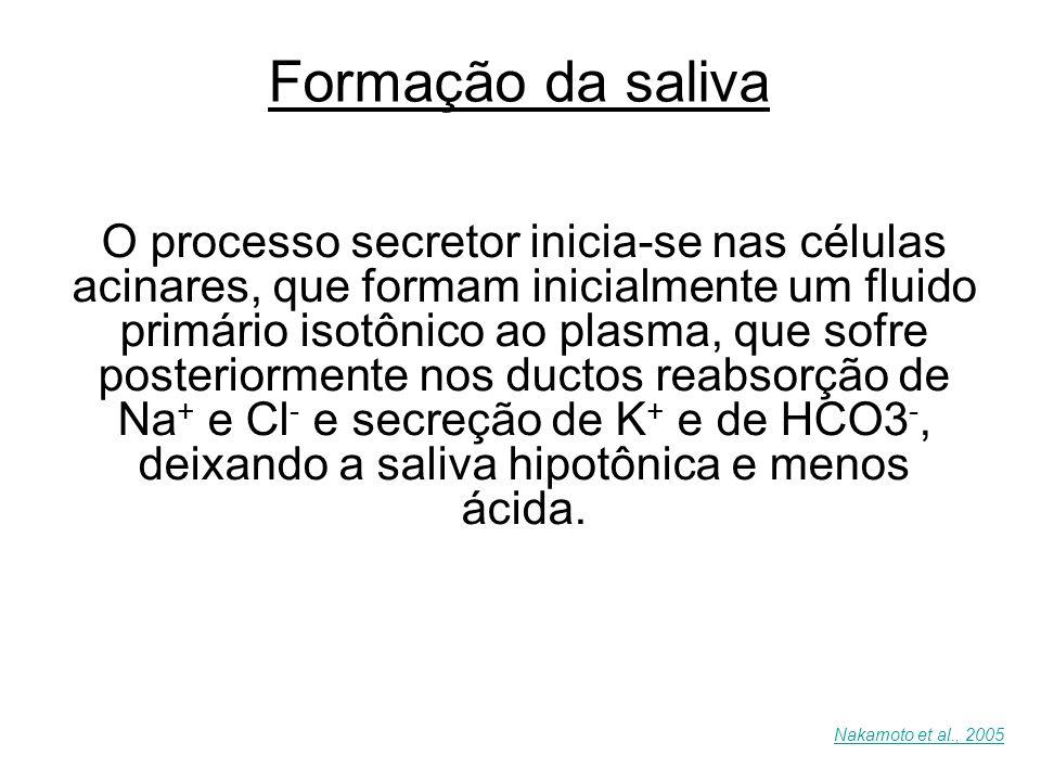 Formação da saliva O processo secretor inicia-se nas células acinares, que formam inicialmente um fluido primário isotônico ao plasma, que sofre poste