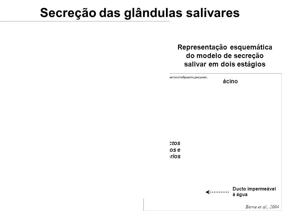 ácino Secreção das glândulas salivares Representação esquemática do modelo de secreção salivar em dois estágios Berne et al., 2004 A ritmos máximos de
