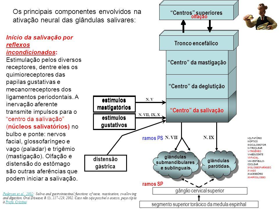 Centro da salivação Centro da deglutição Centro da mastigação Tronco encefálico Centros superiores estímulos mastigatórios estímulos gustativos N.