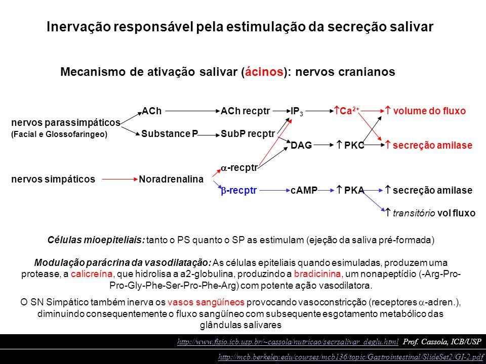 ACh ACh recptrIP 3  Ca 2+  volume do fluxo nervos parassimpáticos (Facial e Glossofaríngeo) Substance P SubP recptr DAG  PKC  secreção amilase 