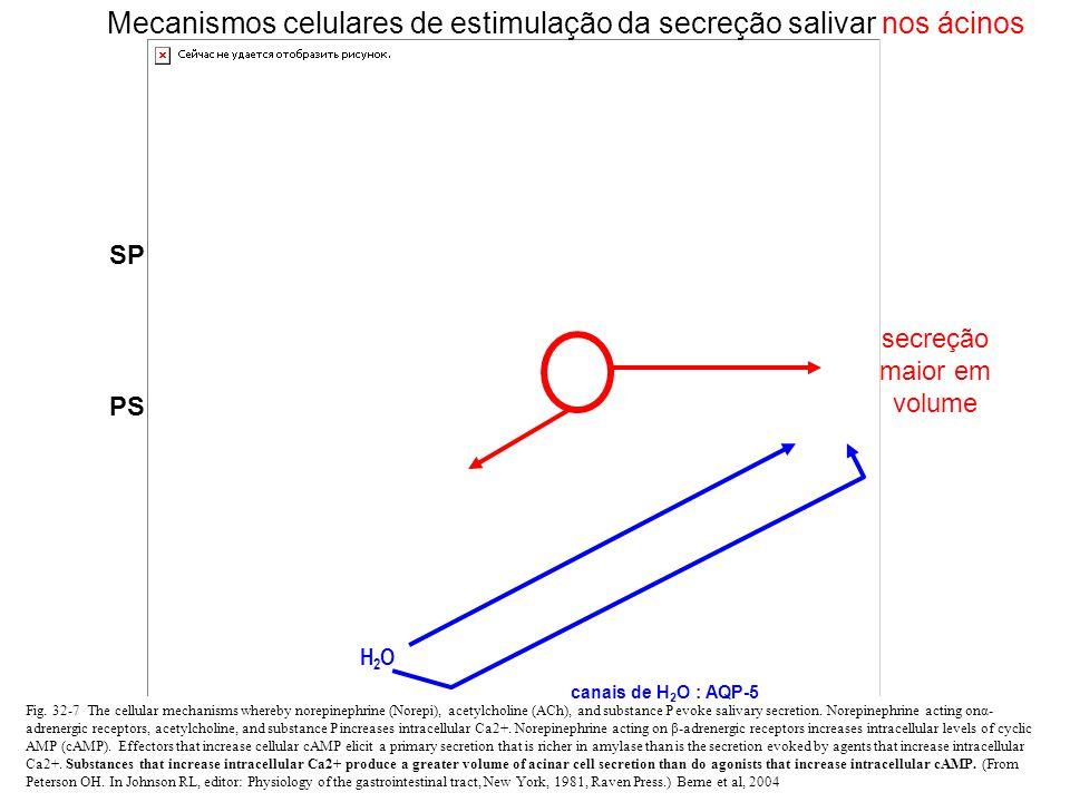 Controle humoral (endócrino) Secundário ao controle neural Hormônios antinatriuréticos (aldosterona, corticosterona e ANGII): saliva pobre em água e Na+ e rica em K+ e H+ (  pH) Influência circadiana A secreção salivar diminui com a diminuição do alerta e durante o sono (paralelamente à diminuição da freqüência de deglutição