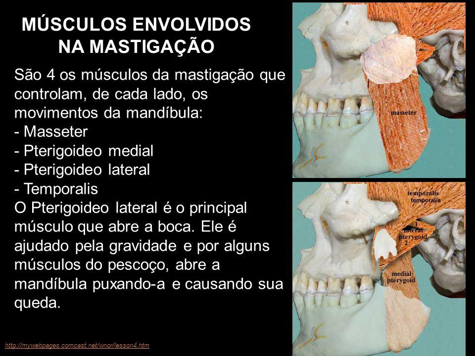 São 4 os músculos da mastigação que controlam, de cada lado, os movimentos da mandíbula: - Masseter - Pterigoideo medial - Pterigoideo lateral - Tempo