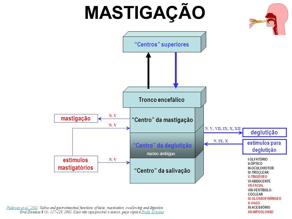 O ciclo mastigatório Elevação da mandíbula contração reflexa dos mm.