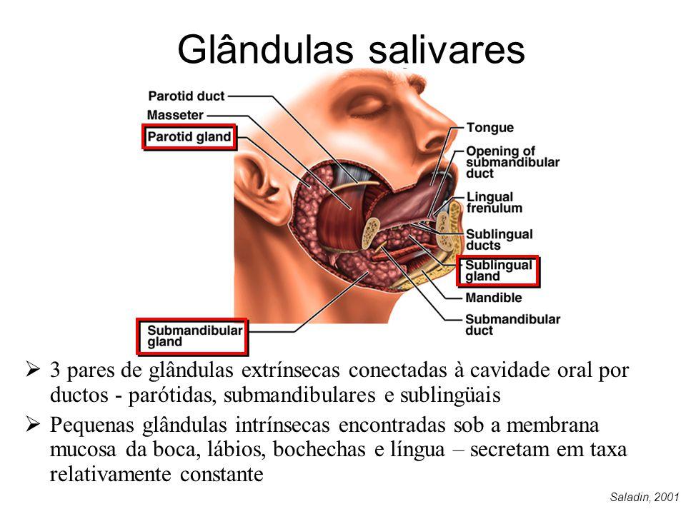 Arco zigomático Ângulo da mandíbula Glândulas salivares  Parótidas: alto conteúdo de H 2 0, eletrólitos e enzimas; Ducto de Stenon  Submandibulares: secreção mista; Ducto de Wharton emerge na papila sublingüal ao lado do frênulo.