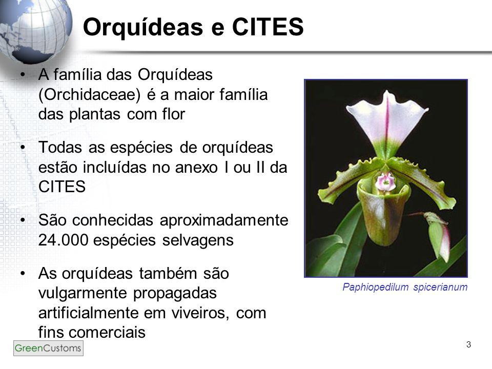 3 Orquídeas e CITES A família das Orquídeas (Orchidaceae) é a maior família das plantas com flor Todas as espécies de orquídeas estão incluídas no ane