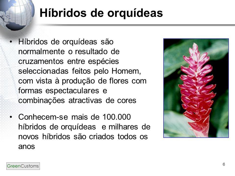 6 Híbridos de orquídeas Híbridos de orquídeas são normalmente o resultado de cruzamentos entre espécies seleccionadas feitos pelo Homem, com vista à p