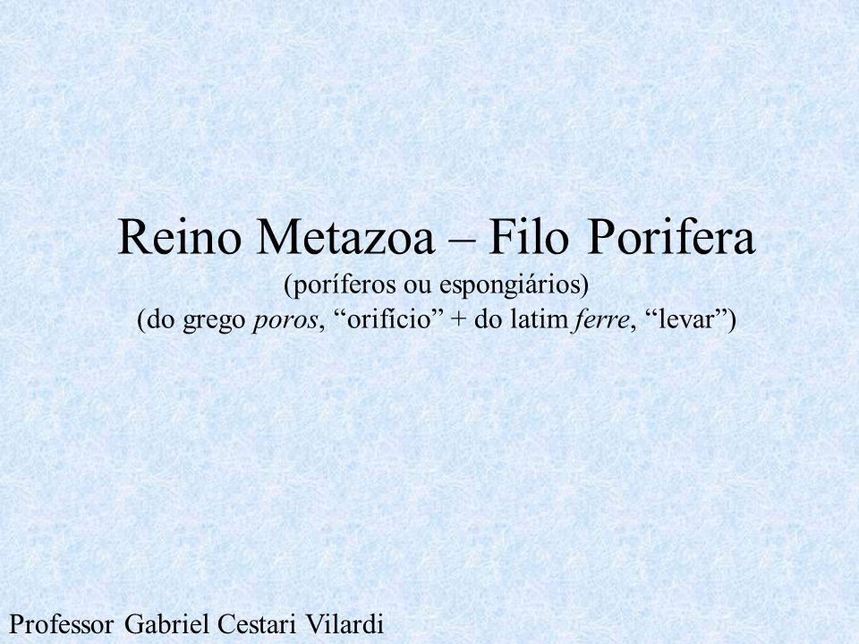 """Reino Metazoa – Filo Porifera (poríferos ou espongiários) (do grego poros, """"orifício"""" + do latim ferre, """"levar"""") Professor Gabriel Cestari Vilardi"""