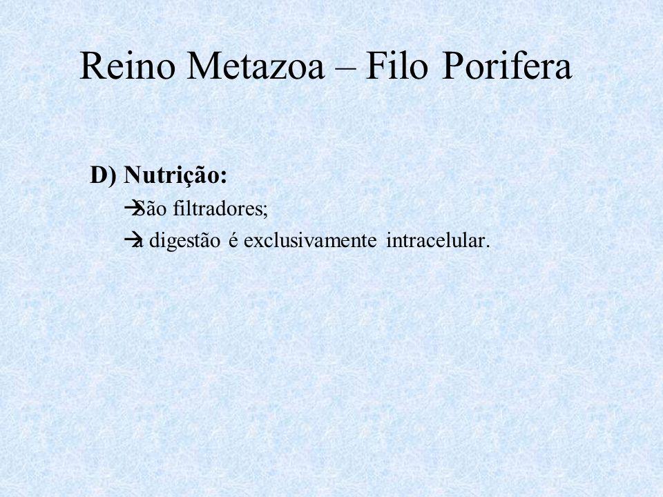 D) Nutrição:  São filtradores;  a digestão é exclusivamente intracelular. Reino Metazoa – Filo Porifera