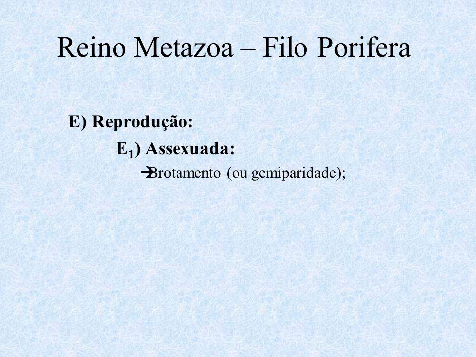 E) Reprodução: E 1 ) Assexuada:  Brotamento (ou gemiparidade); Reino Metazoa – Filo Porifera
