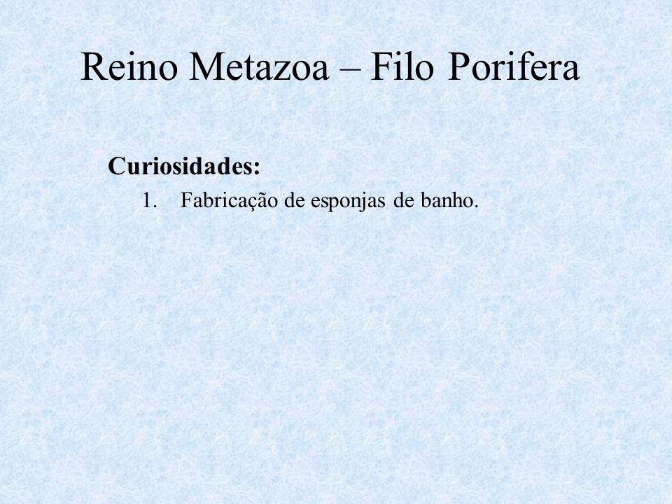 Curiosidades: 1.Fabricação de esponjas de banho. Reino Metazoa – Filo Porifera