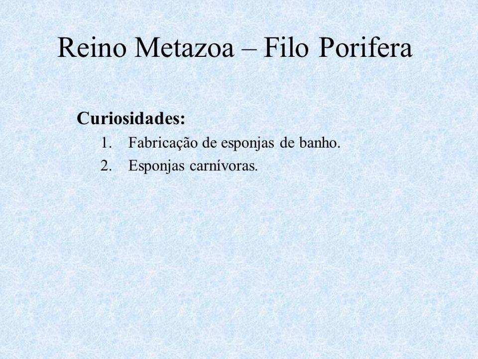 Reino Metazoa – Filo Porifera Curiosidades: 1.Fabricação de esponjas de banho. 2.Esponjas carnívoras.
