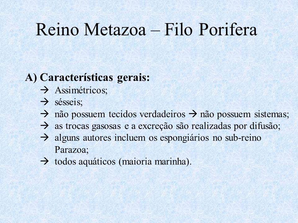 Reino Metazoa – Filo Porifera A)Características gerais:  Assimétricos;  sésseis;  não possuem tecidos verdadeiros  não possuem sistemas;  as troc