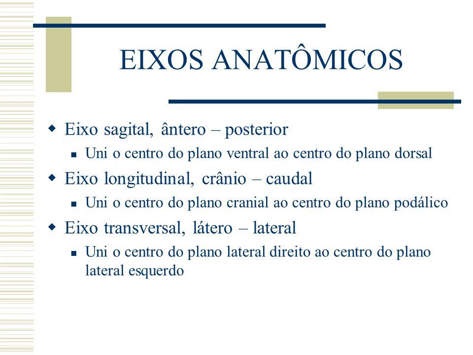 EIXOS ANATÔMICOS  Eixo sagital, ântero – posterior Uni o centro do plano ventral ao centro do plano dorsal  Eixo longitudinal, crânio – caudal Uni o