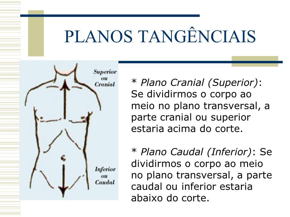 PLANOS TANGÊNCIAIS * Plano Ventral (Anterior): Se dividirmos o corpo em duas partes pelo plano coronal, a parte da frente do corpo seria a ventral ou anterior.
