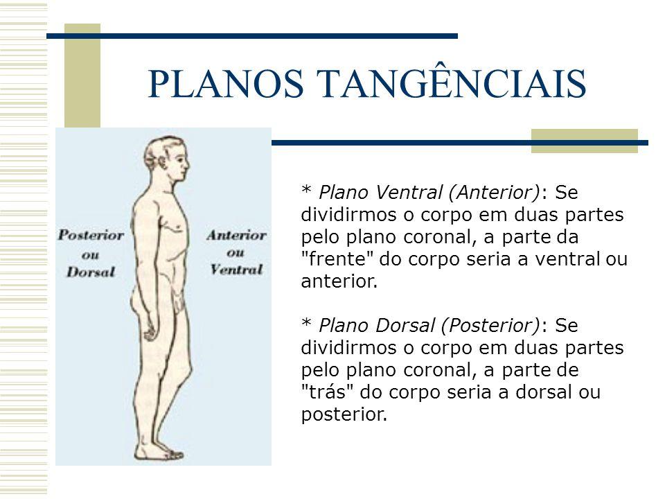 PLANOS TANGÊNCIAIS * Plano Ventral (Anterior): Se dividirmos o corpo em duas partes pelo plano coronal, a parte da