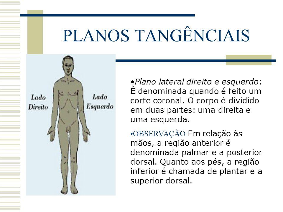 PLANOS TANGÊNCIAIS Plano lateral direito e esquerdo: É denominada quando é feito um corte coronal. O corpo é dividido em duas partes: uma direita e um