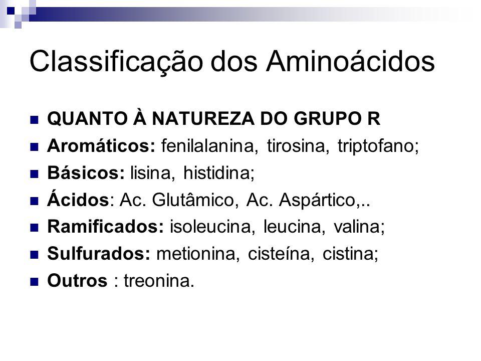 Classificação dos Aminoácidos QUANTO À NATUREZA DO GRUPO R Aromáticos: fenilalanina, tirosina, triptofano; Básicos: lisina, histidina; Ácidos: Ac. Glu