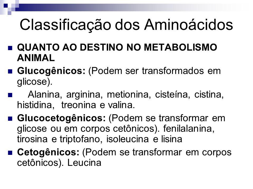 Classificação dos Aminoácidos QUANTO AO DESTINO NO METABOLISMO ANIMAL Glucogênicos: (Podem ser transformados em glicose). Alanina, arginina, metionina