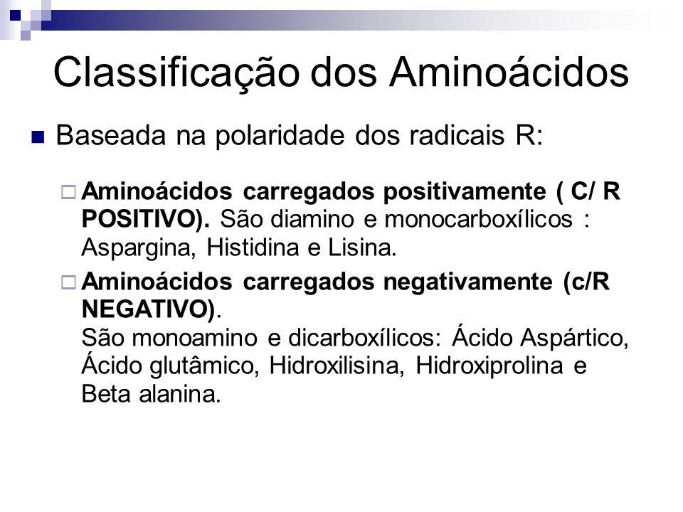  Aminoácidos carregados positivamente ( C/ R POSITIVO). São diamino e monocarboxílicos : Aspargina, Histidina e Lisina.  Aminoácidos carregados nega