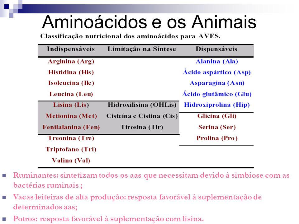 Aminoácidos e os Animais Ruminantes: sintetizam todos os aas que necessitam devido à simbiose com as bactérias ruminais ; Vacas leiteiras de alta prod