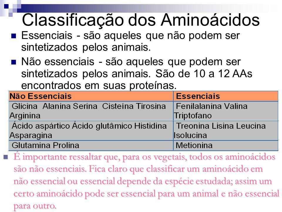 Classificação dos Aminoácidos Essenciais - são aqueles que não podem ser sintetizados pelos animais. Não essenciais - são aqueles que podem ser sintet