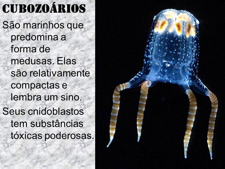 Cubozoários São marinhos que predomina a forma de medusas.