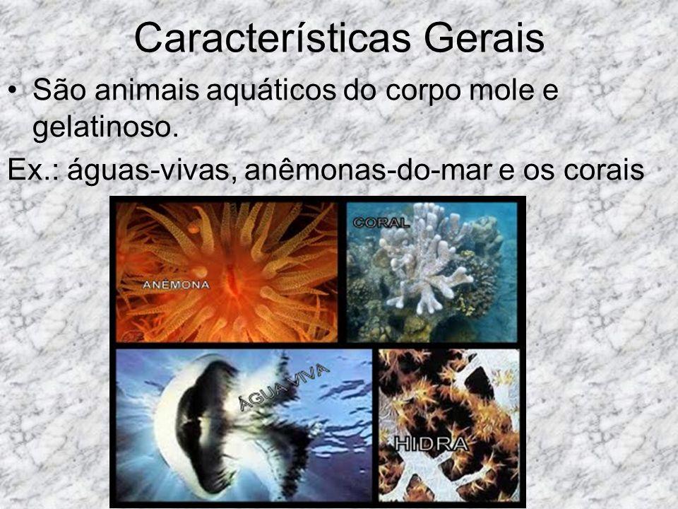 Características Gerais São animais aquáticos do corpo mole e gelatinoso.