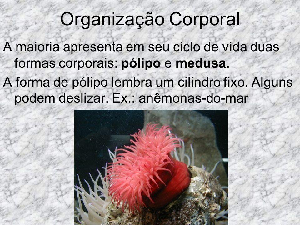 Antozoários É o grupo das anêmonas-do-mar e os corais, são marinhos e tem apenas formas polipóides.