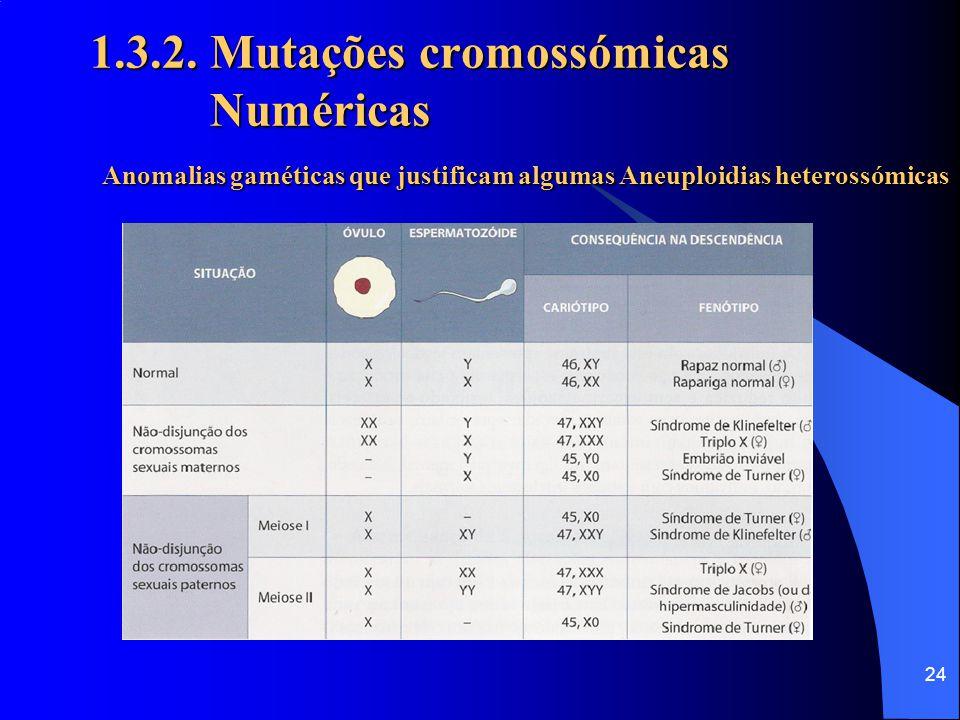 23 1.3.2. Mutações cromossómicas Numéricas Síndroma de Turner (45,X0)– Aneuploidia (monossomia) heterossómica  Desenvolvem características femininas