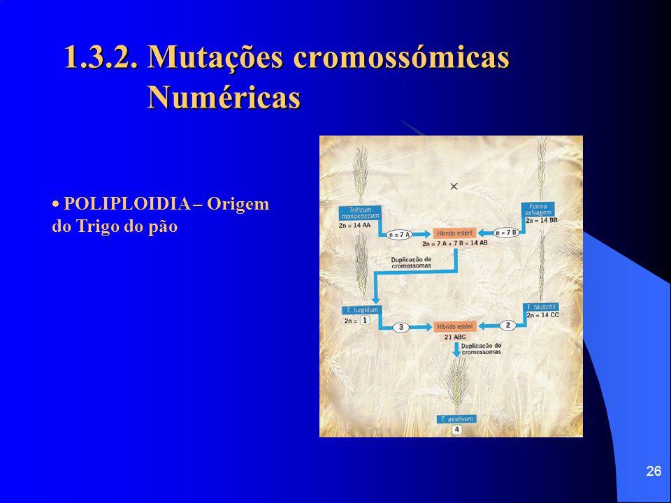 25 1.3.2. Mutações cromossómicas Numéricas  POLIPLOIDIA - Na espécie humana a poliploidia é letal. Nas plantas, não só é viável como pode conduzir a