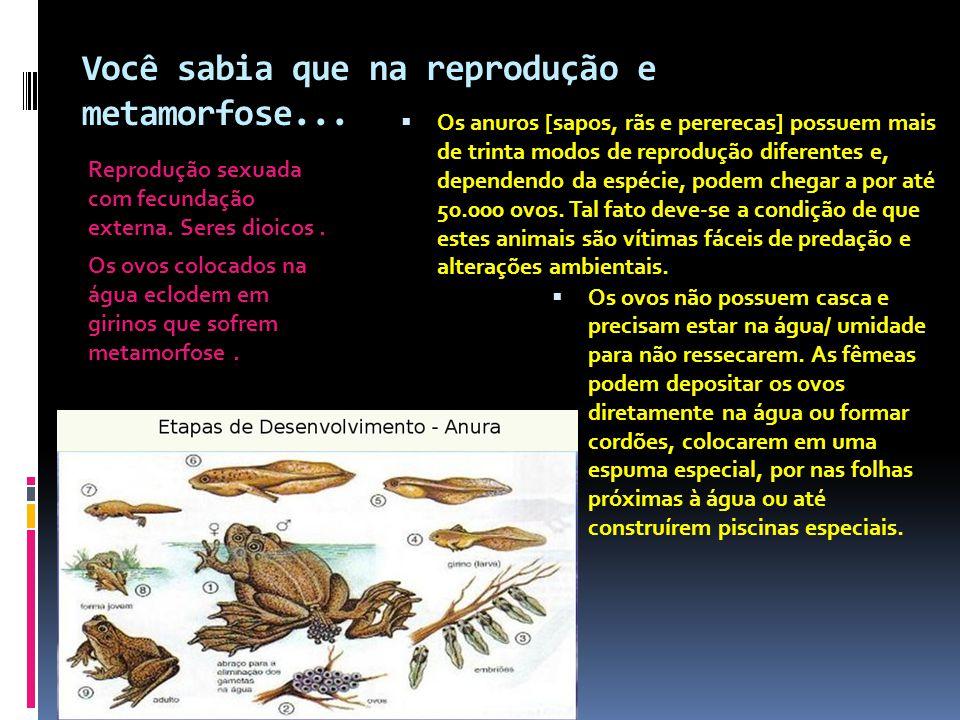 Você sabia que na reprodução e metamorfose... Reprodução sexuada com fecundação externa. Seres dioicos. Os ovos colocados na água eclodem em girinos q