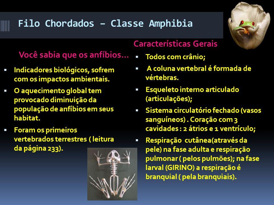 Filo Chordados – Classe Amphibia Você sabia que os anfíbios... Características Gerais  Todos com crânio;  A coluna vertebral é formada de vértebras.