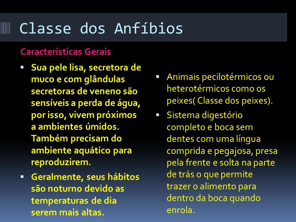Classe dos Anfíbios Características Gerais  Sua pele lisa, secretora de muco e com glândulas secretoras de veneno são sensíveis a perda de água, por