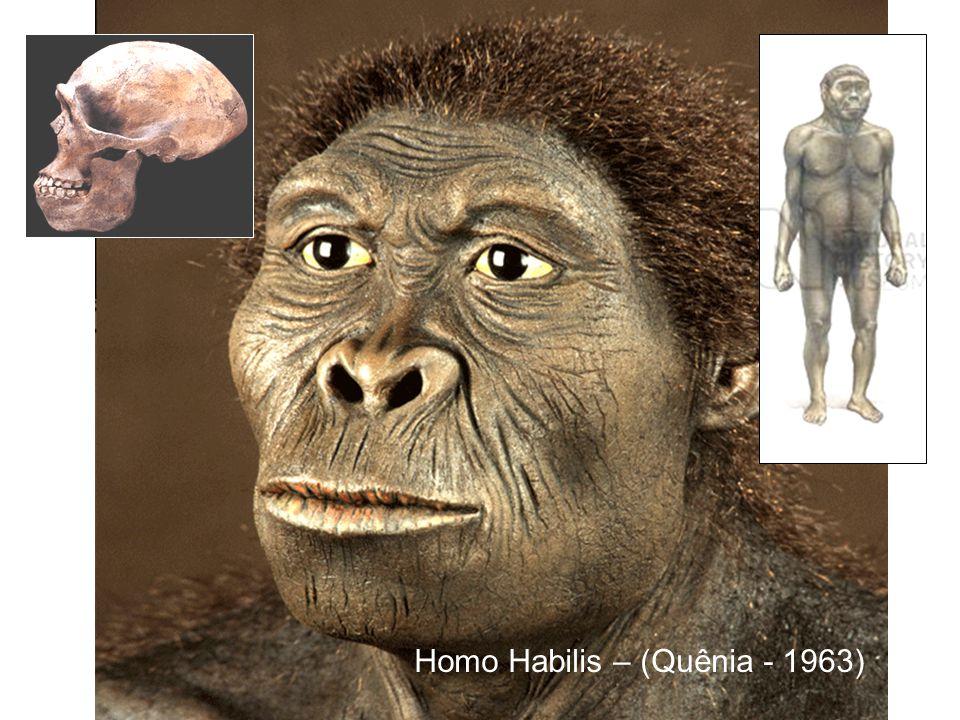 Homo Habilis – (Quênia - 1963)