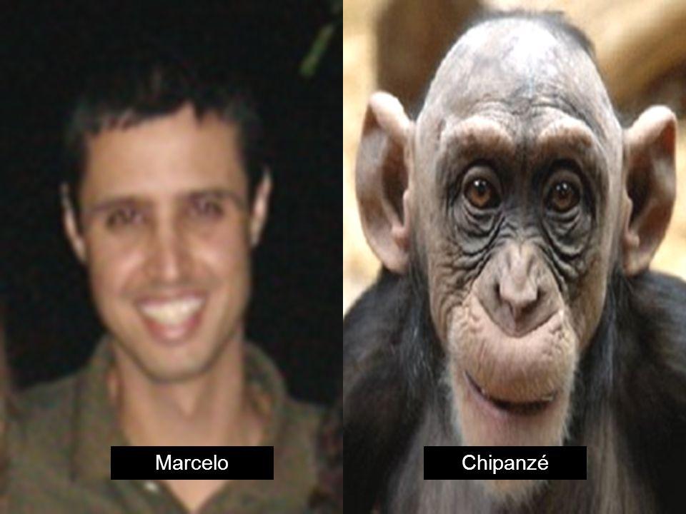 MarceloChipanzé