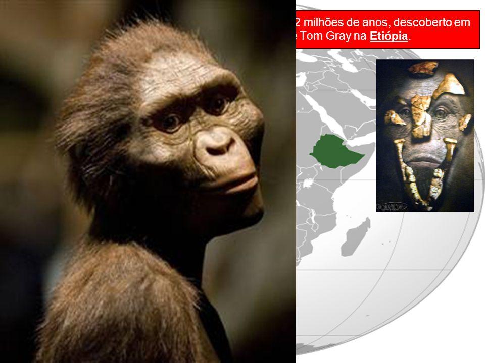 Lucy é um fóssil de Australopithecus afarensis de 3,2 milhões de anos, descoberto em 1974 pelo professor Donald Johanson e pelo estudante Tom Gray na