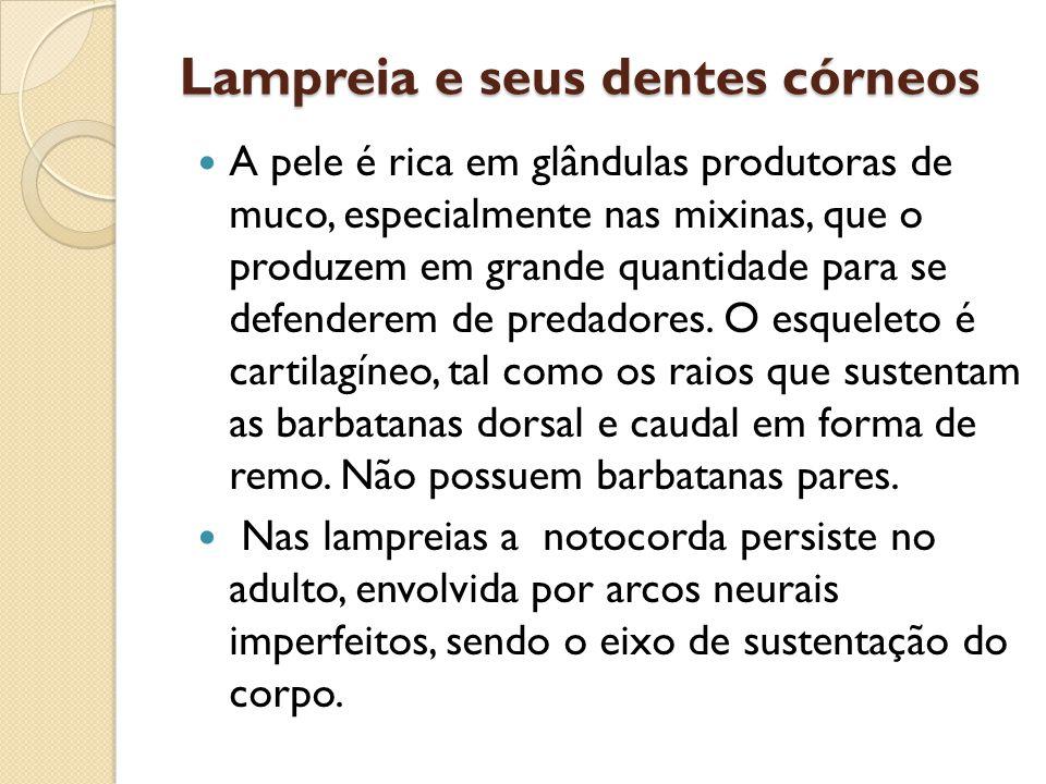 Lampreia e seus dentes córneos A pele é rica em glândulas produtoras de muco, especialmente nas mixinas, que o produzem em grande quantidade para se defenderem de predadores.
