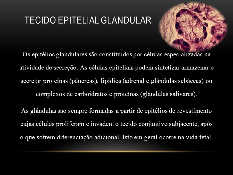 TECIDO EPITELIAL GLANDULAR Os epitélios glandulares são constituídos por células especializadas na atividade de secreção. As células epiteliais podem