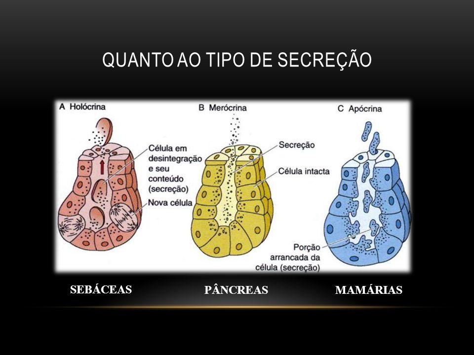 QUANTO AO TIPO DE SECREÇÃO PÂNCREASMAMÁRIAS SEBÁCEAS