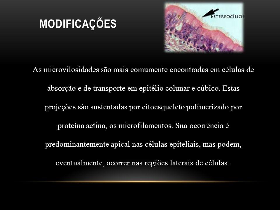 MODIFICAÇÕES As microvilosidades são mais comumente encontradas em células de absorção e de transporte em epitélio colunar e cúbico. Estas projeções s