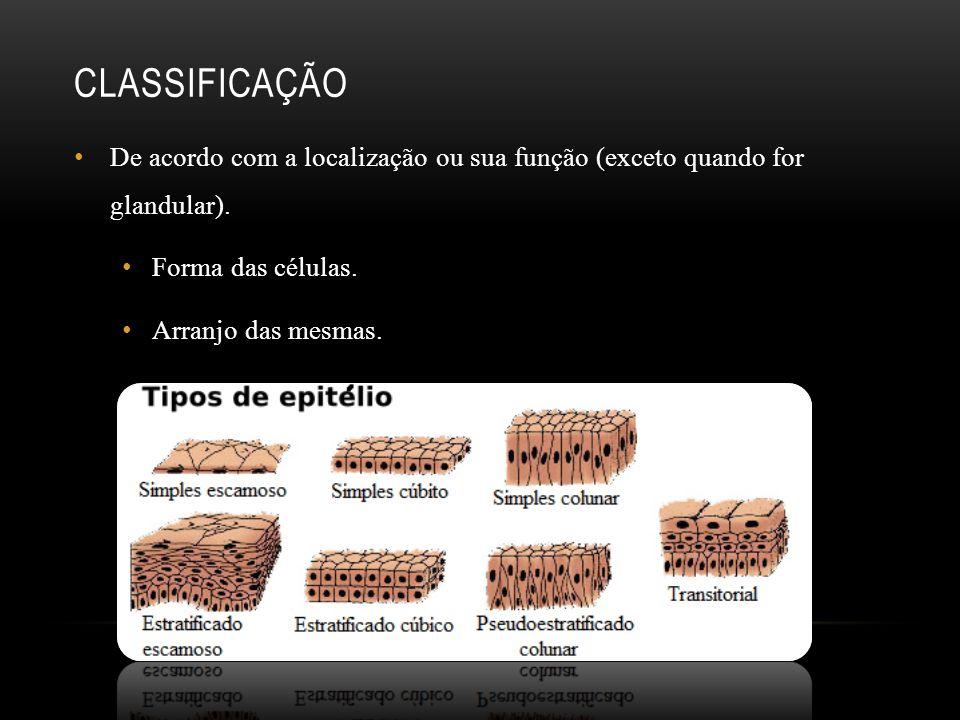 CLASSIFICAÇÃO De acordo com a localização ou sua função (exceto quando for glandular). Forma das células. Arranjo das mesmas.