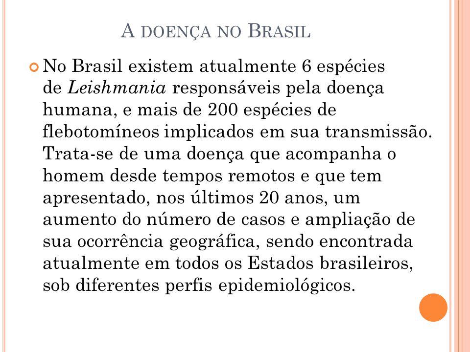A DOENÇA NO B RASIL No Brasil existem atualmente 6 espécies de Leishmania responsáveis pela doença humana, e mais de 200 espécies de flebotomíneos imp