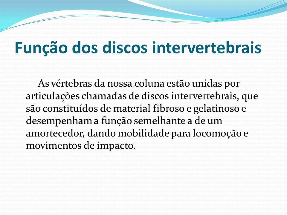 Função dos discos intervertebrais As vértebras da nossa coluna estão unidas por articulações chamadas de discos intervertebrais, que são constituídos