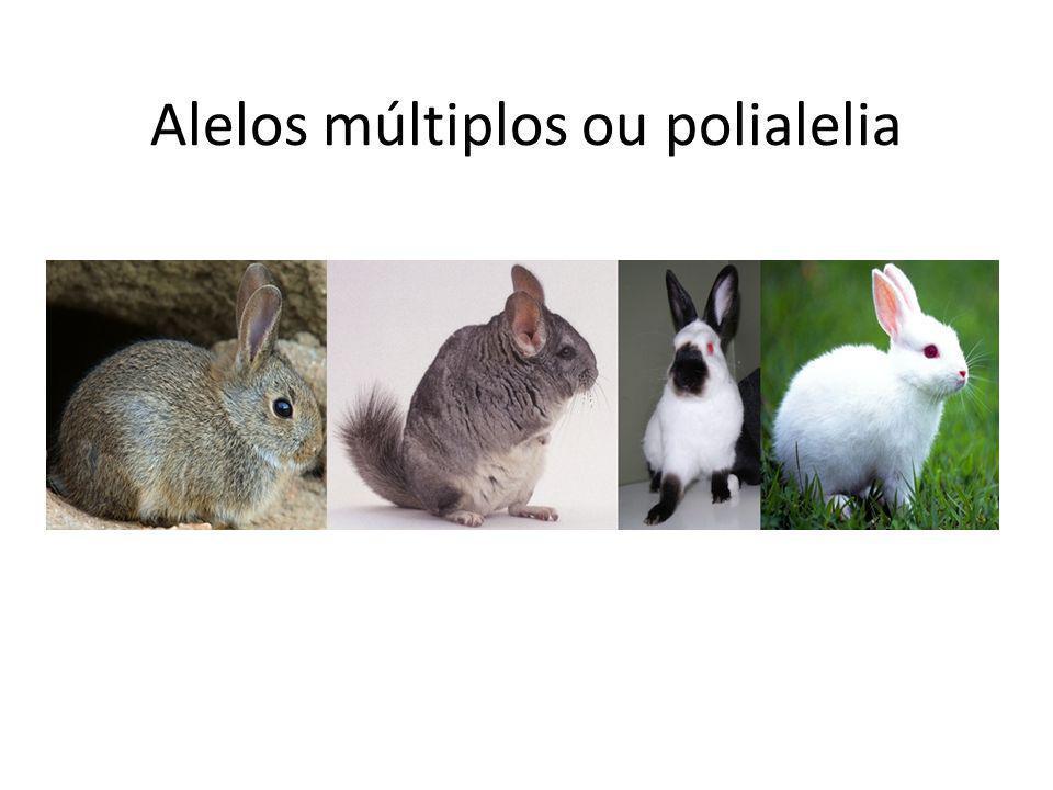 Alguns exercícios O cruzamento de um coelho chinchila com um outro himalaiaproduziu descendentes da seguinte proporção: ¼ chinchila, ½himalaia e ¼ albino.