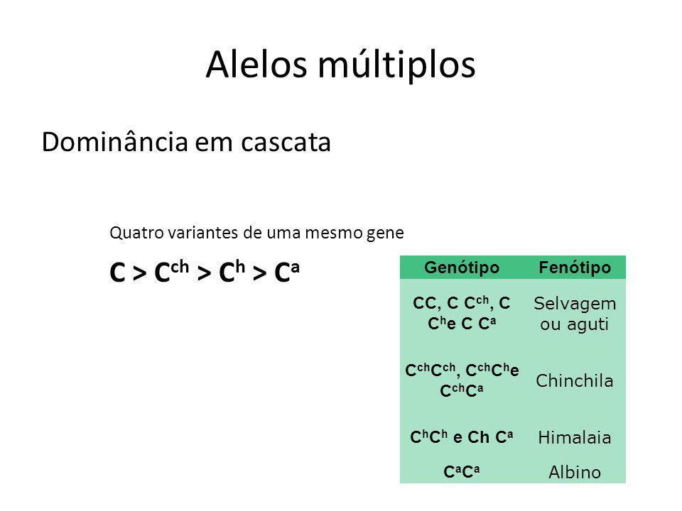 Alelos múltiplos Dominância em cascata Quatro variantes de uma mesmo gene C > C ch > C h > C a GenótipoFenótipo CC, C C ch, C C h e C C a Selvagem ou