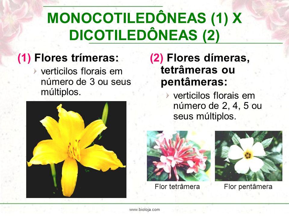 www.bioloja.com MONOCOTILEDÔNEAS (1) X DICOTILEDÔNEAS (2) (1) Flores trímeras: verticilos florais em número de 3 ou seus múltiplos. (2) Flores dímeras