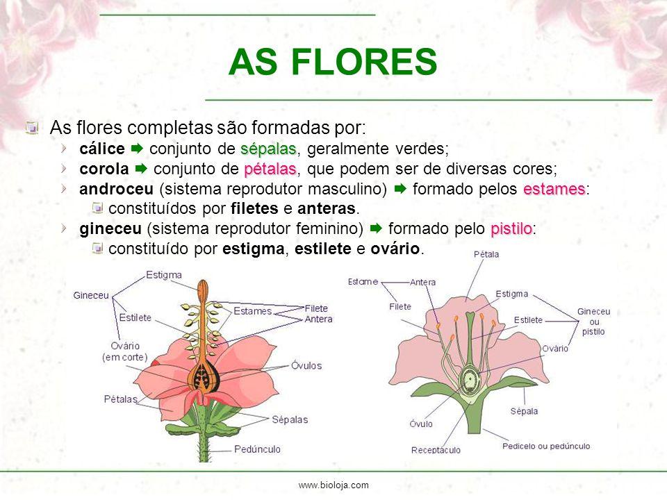 www.bioloja.com AS FLORES As flores completas são formadas por: sépalas cálice  conjunto de sépalas, geralmente verdes; pétalas corola  conjunto de